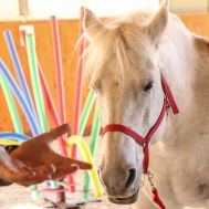 Equine Assisted Training Courses